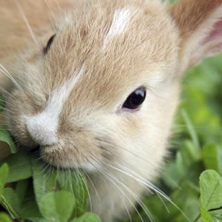 BlocConseil_rongeurs-et-lapins-qu-y-a-t-il-au-menu