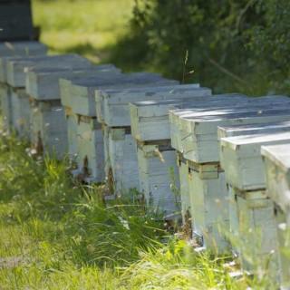 BlocConseil_se-lancer-dans-l-apiculture