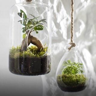 BlocConseil_terrarium-diy-vegetal-deco