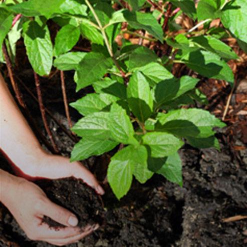 BlocConseil_jardiner-au-naturel