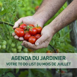 Plants potagers plantes pour le potager et potager botanic for Conseil du jardinier