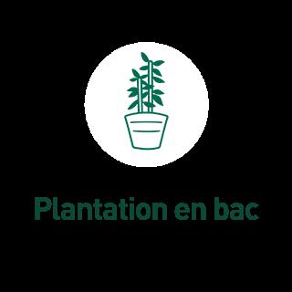 BlocConseil_aide-au-choix-bambous_plantation-en-bac