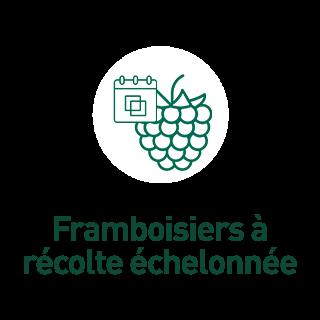 BlocConseil_aide-au-choix-framboisiers_framboisiers-a-recolte-echelonnee