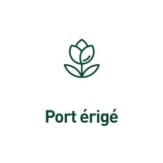 BlocConseil_aide-au-choix-geraniums_port-erige