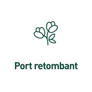 BlocConseil_aide-au-choix-geraniums_port-retombant