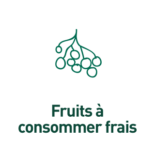 BlocConseil_aide-au-choix-groseilliers_fruits-frais