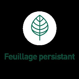 BlocConseil_aide-au-choix-plantes-grimpantes_feuillage-persistant