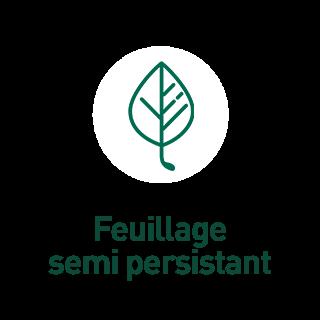 BlocConseil_aide-au-choix-plantes-grimpantes_feuillage-semi-persistant