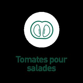 BlocConseil_aide-au-choix-tomates-bio_tomates-pour-salade