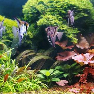 Une gamme complète pour aquarium