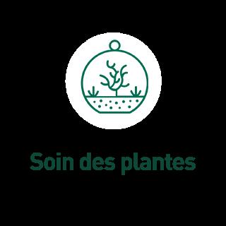 BlocConseil_aquariophilie_soin-des-plantes