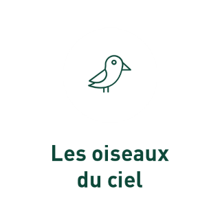 BlocConseil_grain-de-vie_pour-les-oiseaux-du-ciel