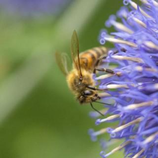 BlocConseil_inviter-la-biodiversite-au-jardin