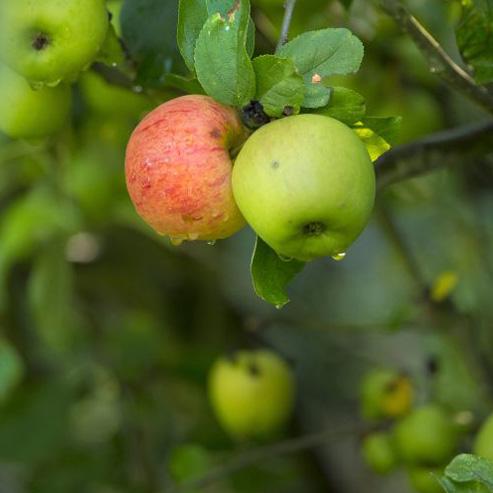 BlocConseil_fruits-et-legumes-bio-mangez-au-rythme-des-saisons