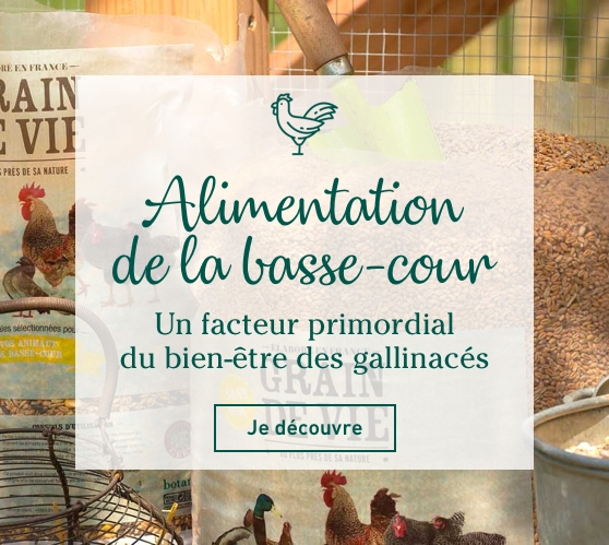 Edito_categorie_alimentation-de-la-basse-cour