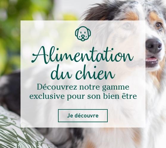 Edito_categorie_alimentation-du-chien