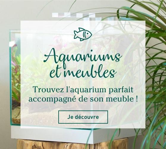 Edito_categorie_aquariums