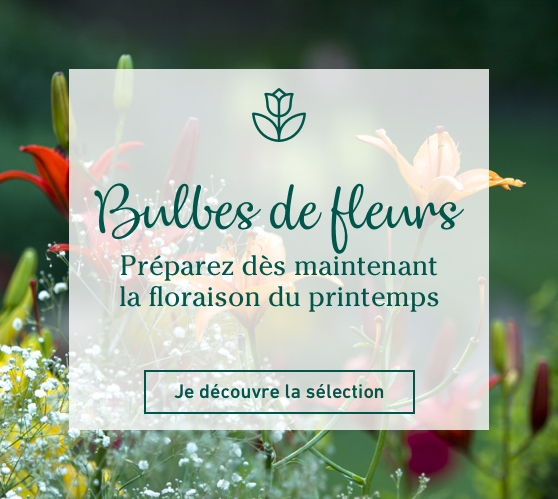 Edito_categorie_bulbes-de-fleurs