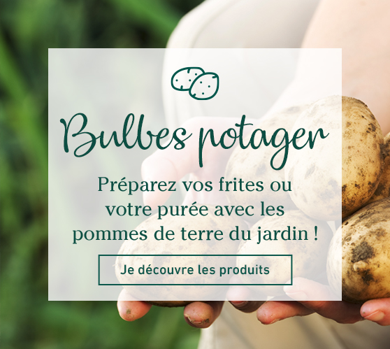 Edito_categorie_bulbes-potagers-pommes-de-terre