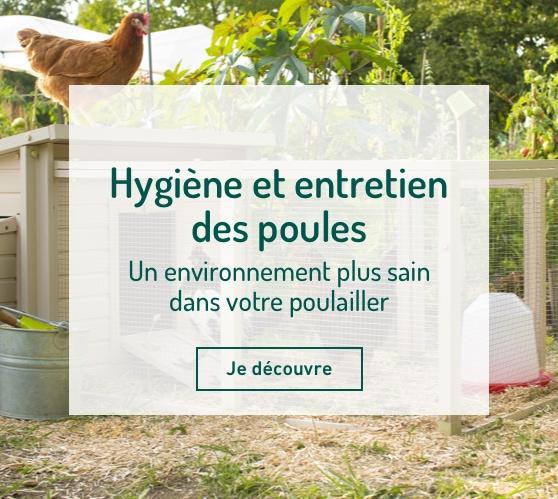 Edito_categorie_hygiene-et-entretien-poules
