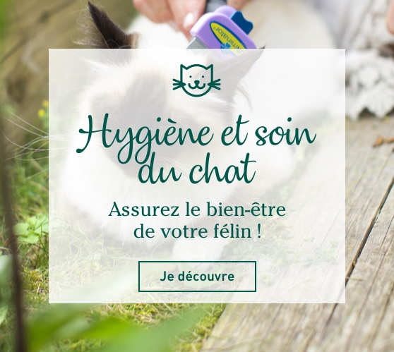 Edito_categorie_hygiene-et-soin-du-chat
