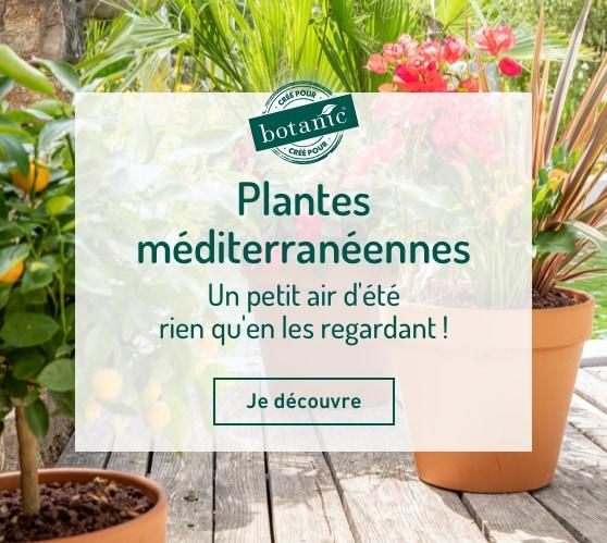 Edito_categorie_les-fleurs-mediterraneennes