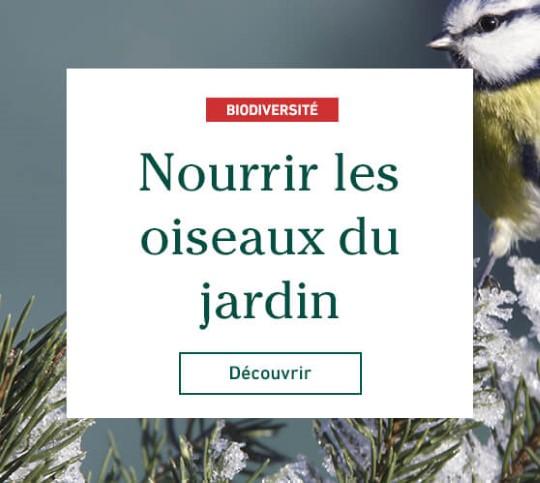 Edito_categorie_oiseaux-des-jardins_2019