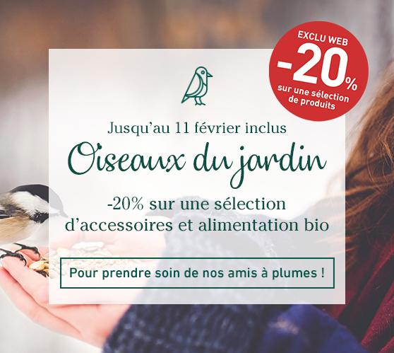 Edito_categorie_oiseaux-du-jardin