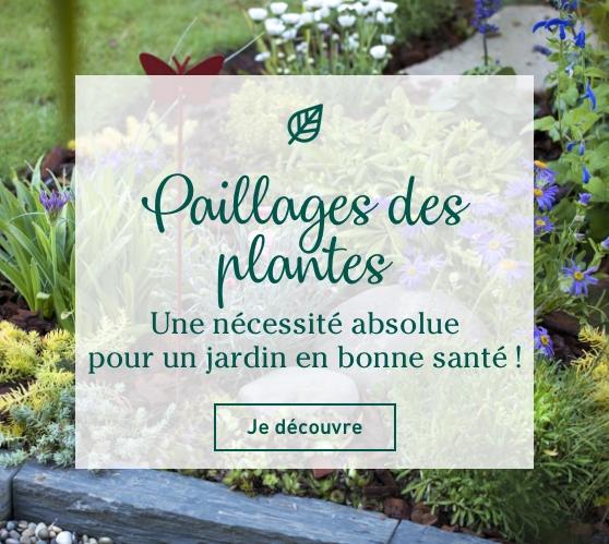 Edito_categorie_paillages-plantes