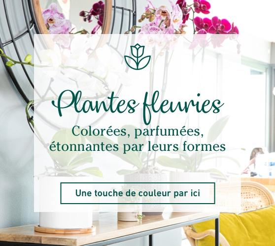 Edito_categorie_plantes-fleuries