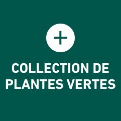 Notre sélection de plantes carnivores