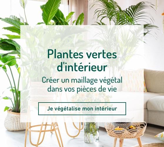 Edito_categorie_plantes-vertes
