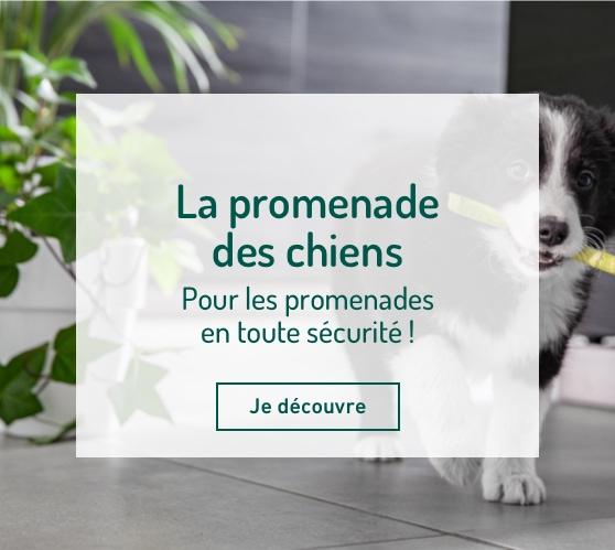 Edito_categorie_promenade-des-chiens
