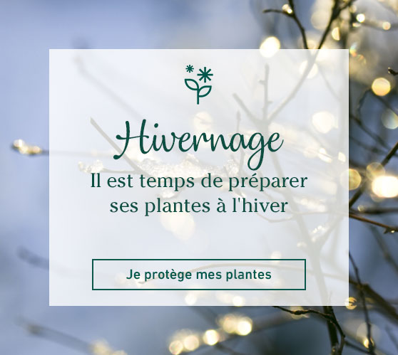 Edito_categorie_protection-des-plantes-et-du-sol