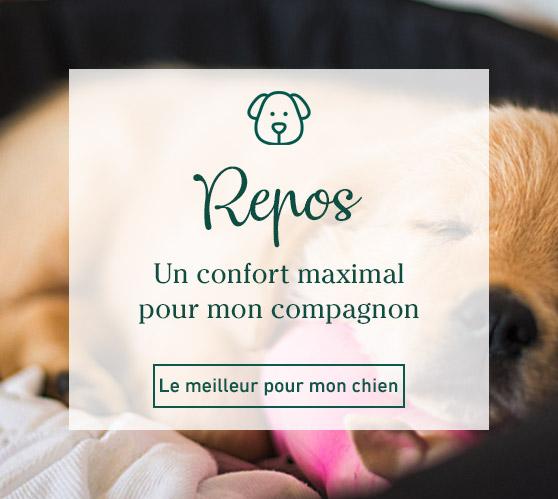 Edito_categorie_repos-des-chiens