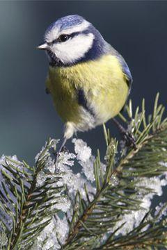 Accueillir et nourrir les oiseaux du jardin en hiver
