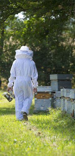 Apidis : les bergers des abeilles