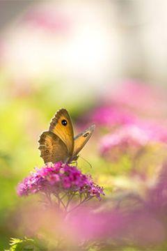 Créez votre prairie fleurie