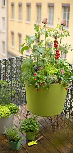 plants potagers sur balcon conseil potager balcon et terrasse botanic botanic. Black Bedroom Furniture Sets. Home Design Ideas