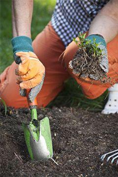 Désherbage naturel : jardinons écologique !
