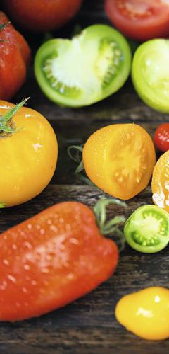 Les tomates, rougir de plaisir