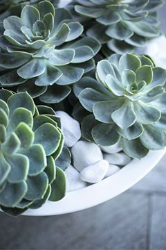prendre soin de ses plantes grasses conseil balcon terrasse botanic botanic. Black Bedroom Furniture Sets. Home Design Ideas