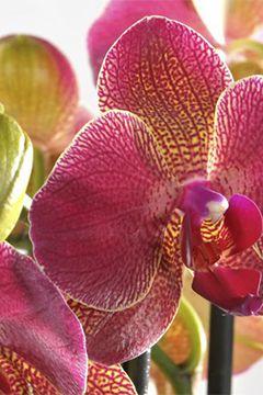 Prendre Soin De Son Orchidee Conseil Plantes Et Orchidees