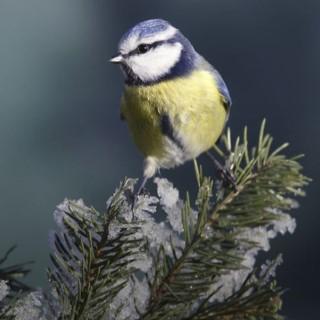 BlocConseil_accueillir-et-nourrir-les-oiseaux-du-jardin-en-hiver