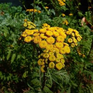 BlocConseil_des-mauvaises-herbes-utiles