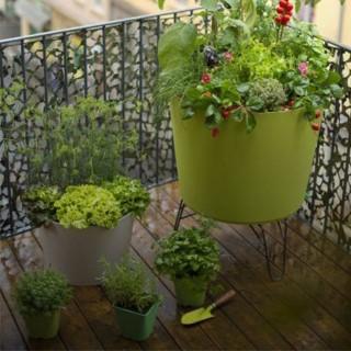 BlocConseil_des-plants-potagers-sur-mon-balcon
