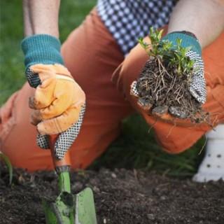BlocConseil_desherbage-naturel-jardinons-ecologique