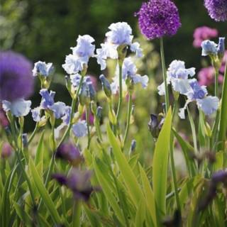BlocConseil_les-iris-fleurs-de-charme