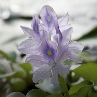 BlocConseil_les-plantes-aquatiques
