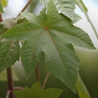 BlocConseil_les-plantes-naturellement-repulsives